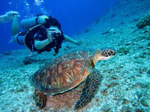 How to Easily Plan and Get Prepared For a Diving Holiday